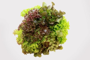 Greens Living Mixed Lettuce
